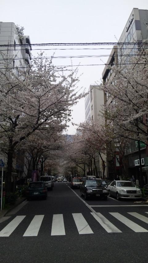 桜舞い散る。