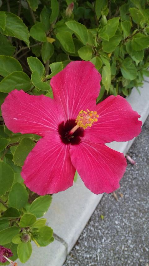 沖縄の思い出②